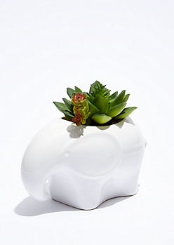 Mini Elephant Potted Faux Succulent